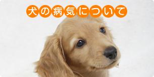 犬の病気について