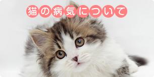 猫の病気について