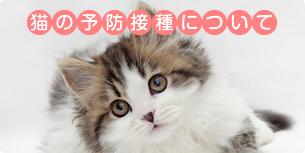 猫の予防接種について